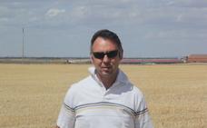 Raúl Martín Legido en una parcela de cereal en Madrigal de las altas Torres. F. G. MURIEL