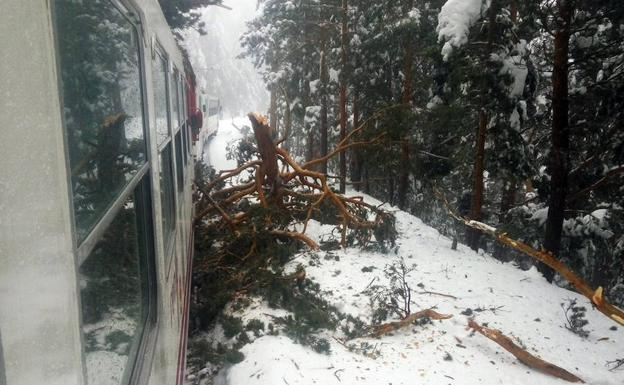 Tronco arrancado de cuajo junto a los vagones del cercanías que ha sufrido el percance en al sierra. /Imagen de Twitter de @IonSaitan