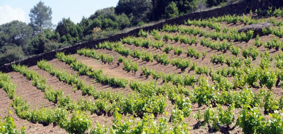 El concurso Garnachas del Mundo ha recibido 800 vinos a una semana del cierre del plazo de inscripción